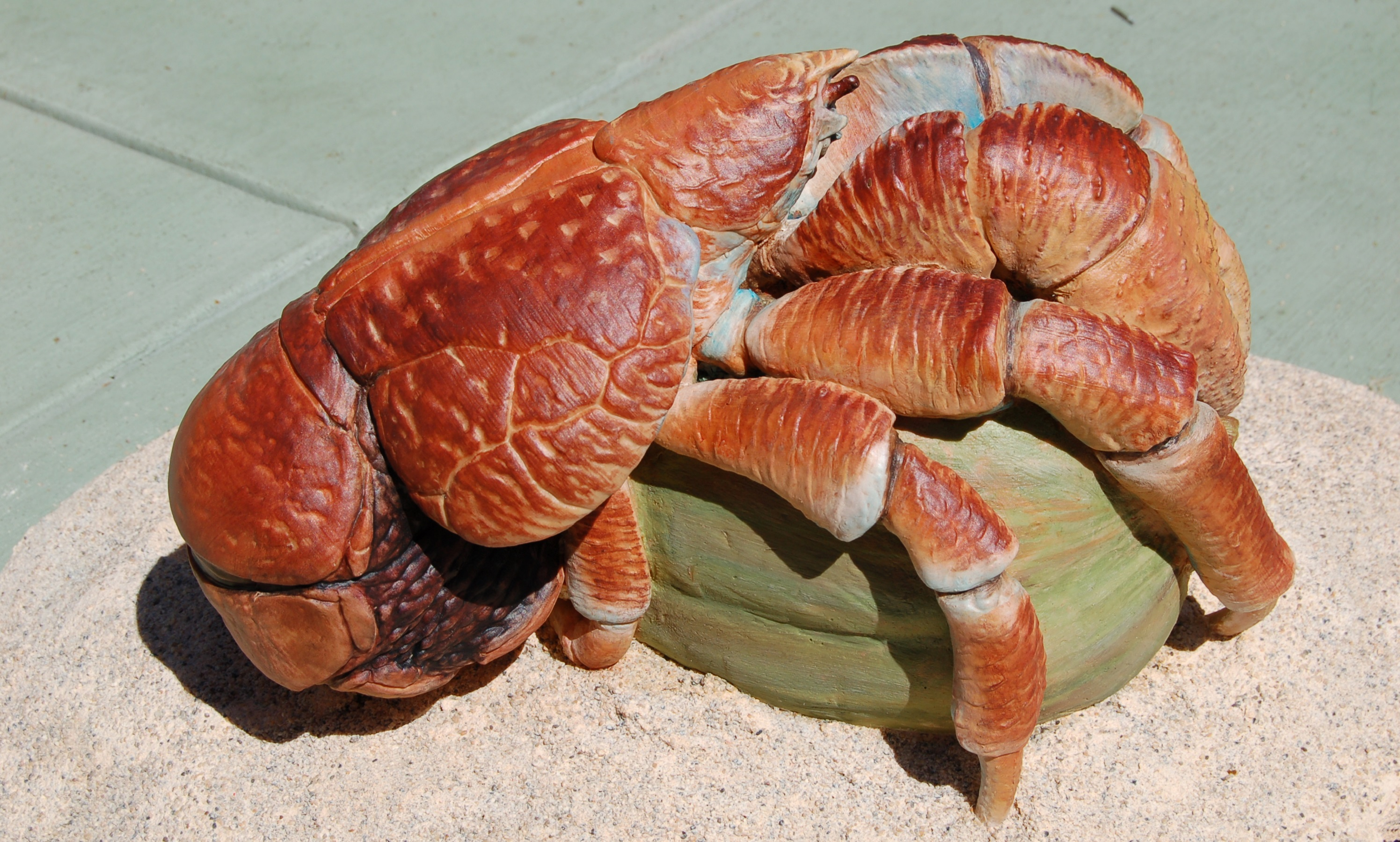 giant coconut crab facts - photo #17