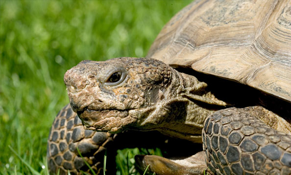 16 Fun Facts About Tortoises